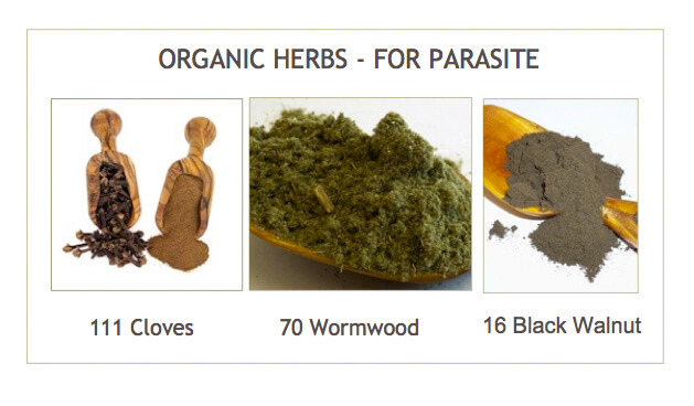 best herbs to get rid of human parasites